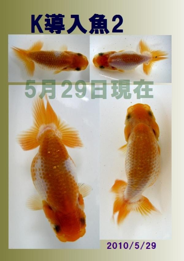 2010_5_29_c_2