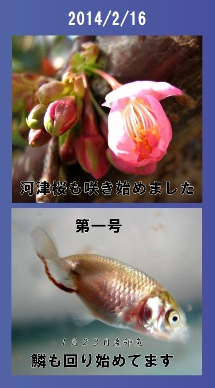 2014_2_16a