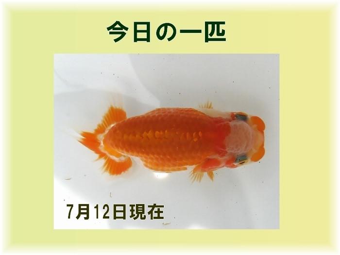 2014_7_12_b
