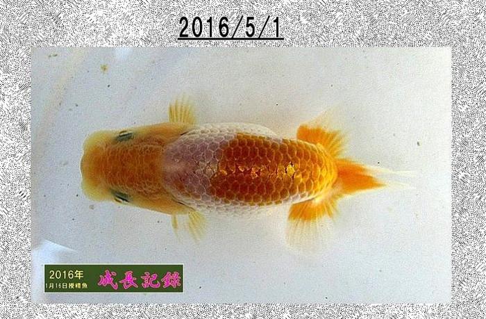 2016_5_1